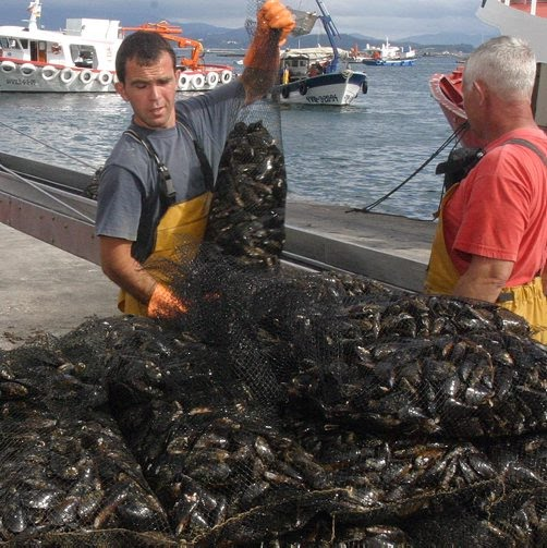 Fish Farms Muscling In On Mussels - North West Iberia Wine Tours